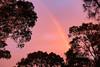 Rainbow (1DesertRose) Tags: rainbow sunset trees sky colourful nsw australia pretty cute