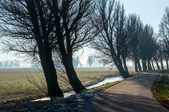 Winding road (pierre bakker) Tags: raerd friesland netherlands nl meadow greide fryslân foggymorning winding bomen weg bochtig weiland sloot ditch sunrise zonopkomst