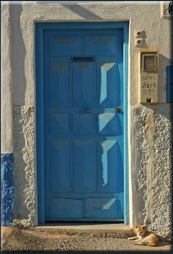blue door and blonde cat