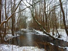 die Schaale in Pamprin (Sophia-Fatima) Tags: pamprin mecklenburgvorpommern deutschland naturschutzgebietschaalelauf schaale river fluss schnee snow