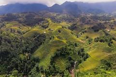 Rýžové terasy v údolí Muong Hua (zcesty) Tags: vietnam26 terasa rýže pole krajina hory vietnam dosvěta làocai vn