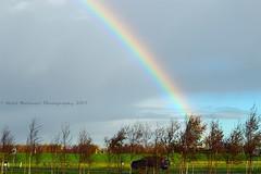 Paysage : Rainbow at Loevesteinse Randweg, Schiphol (Nabil Molinari Photography) Tags: paysage rainbow