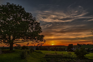 the tree and a great sunset