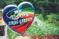Cebu's Sirao Garden - Little Amsterdam (Kristina A. Foto) Tags: siraogarden cebu visayas philippines nature flowers travel littleamsterdam
