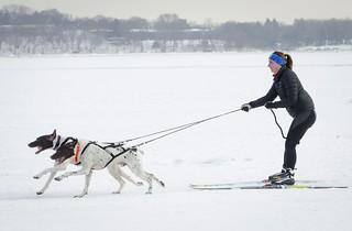Skijoring - City of Lakes Loppet
