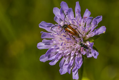 Friends (lkiraly72) Tags: bugs insects wildflower summer