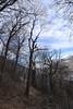 Castanea (arborist.ch) Tags: baumpflege baum baumklettern edelkastanie castanea sativa treecare tree treeclimbing