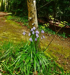 (Morisseau Mathieu) Tags: brittany bretagne finistere bzh taule forest foret canon700d