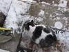R. C. (elisabeth.mcghee) Tags: kater cat male grau gray white weiss