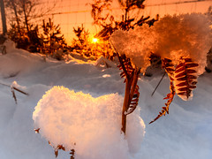 """Don't fence me in...""-2 (grahamrobb888) Tags: snow d800 nikon nikond800 nikkor nikkor20mmf18 scotland sunset sunsetcolours evening eveninglight eveningsun colours wideangle fence perspective perthshire cokin"