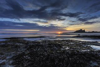 Seaweed and Sunrises