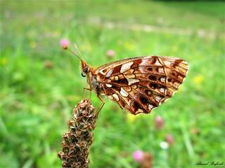 Butterfly 1571