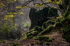 Perfiles (SantiMB.Photos) Tags: 2blog 2tumblr 2ig urbasa bosque forest otoño autumn musgo moss luz light 500px geo:lat=4286133960 geo:lon=216838770 geotagged urdiain navarra españa esp