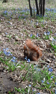Eichhörnchem im Schlosspark