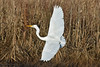 G-W-EGRET (keithboyer1963) Tags: flying birds egrets water