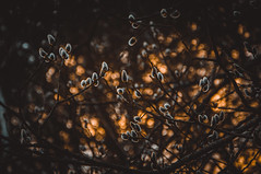 nature (irina_kostenich) Tags: forest darkwood trees nature mothernature spring blossom sunset belarus hdwallpapers fog smoke foggy atmosphericevening walk wood darkness april greenwood tree sky beautiful evening city summer july vitebsk
