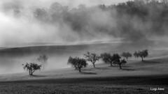 foggy countryside - San Severino Marche (Luigi Alesi) Tags: sanseverino italia italy marche macerata rocchetta paesaggio landscape scenery bianco e nero black white alberi trees nebbia fog mist misty foggy natura nature nikon coolpix p330 raw passeggiandoinbicicletta
