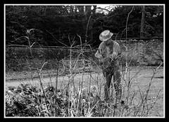 Wire Gardener Ilford HPS 800 (veggiesosage) Tags: blackandwhite newsteadabbey nottinghamshire gx20 garden dxofilmpack