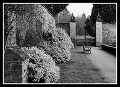 Garden Wall and Gate Ilford Pan F Plus 50 (veggiesosage) Tags: blackandwhite newsteadabbey nottinghamshire gx20 garden dxofilmpack