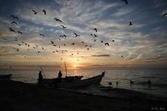 Retour de pêche (mars-chri) Tags: celestun caraibes yucatan portdepêche flamantrose mexique couchersopleil pélicans mouettes sternes frégattes fabuleuse excellencedumois