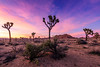 Joshua Tree National Park II (Karl Erik Vasslag Photography) Tags: joshuatree park nationalpark usa california southerncalifornia desert landscape wideangle sunset sundown ca joshuatreenationalpark karlerikvasslag d810 nikon westcoast nature dry sand color colorful trees bushes