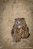 Búho Real (Dani (Atrus)) Tags: buhoreal bubobubo eurosaian eagle owl eurasianeagleowl jdanielfernández elrincóndelosprotegidos nikon aves birds españa spain naturaleza fauna