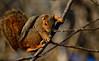 SycamoreGrovePark_022518_005 (kwongphotography) Tags: livermore ca calif wildlife wildlifephotography nature naturephotography livermorearearegionalparkdistrict sycamoregrovepark unitedstates
