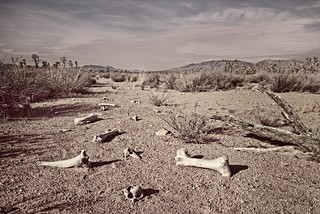 Bones in Mojave Desert 5288 E