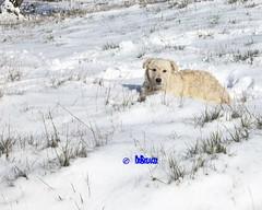 Help ME! (drbreaker) Tags: dog puppy patou eye sick alone