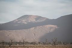 Namibia Sossusvlei (Sas & Rikske) Tags: namibia sossusvlei namibiasossusvlei ericbruyninckx riksketervuren afrika africa eastafrica namibië namib deadvlei desert redsand sand red dunes tree arbre afrique sunrise sun rise shade ombre schaduw mars