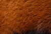 Red Panda (Mathias Appel) Tags: grã¼n red panda animal tier roter kleiner nikon bokeh cute adorable sweet niedlich süs sues suess tree green species bedrohte tierart zoo tierpark deutschland germany female weiblich young jungtier bamboo baum jung ears ohren face gesicht tail schwanz nose nase orange fur fell high iso animals nature natur wildlife bedroht ailurus fulgens vintage 2015 mozilla firefox feet paws paw foot wochenende weekend spring frühling depth depthoffield field blur endangered d7100