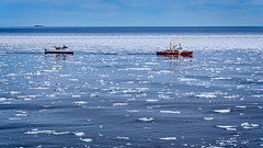 Canadian ice breaker makes a path for the Newfoundland/Labrador ferry in mid-June (Brett of Binnshire) Tags: ice ferry ship ocean coastguard canada locationrecorded twillingate boat packice newfoundland water weather iceberg clouds crowheadnorthtwillingate