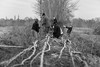 Sunday Hedgelayers (Pittypomm) Tags: longrun meadow hedge hedgelaying laying group people bw monochrome trees ditches tree ditch plank field grass