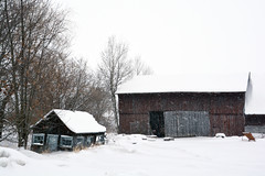 Snowy Monday (emerge13) Tags: paroissedelépiphaniequébeccanada countryside snow winter white blanc neige rural fields trees arbres nature nieve champs country farmhouse wintertextures lépiphaniequébec saariysqualitypictures