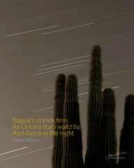 Daily Haiku: Orion - 054/365 (James Milstid) Tags: dailyhaiku haiku haiga poetry jemhaiku orion stars startrails cactus saguaro