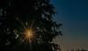 ... firrise... 🌲☀️ (GE.86) Tags: sunrise sunshine sun sunlight sunny tanne baum sonne sonnenschein sonnenaufgang nikond5300 nikon 50mm 50mmfestbrennweite kassel kasselistschön kasselfornia cassel casselfornia fir firrise