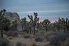 Desert_Road_Trip-4938 (smithjustind) Tags: arizona newyears2018 roadtrip robyn