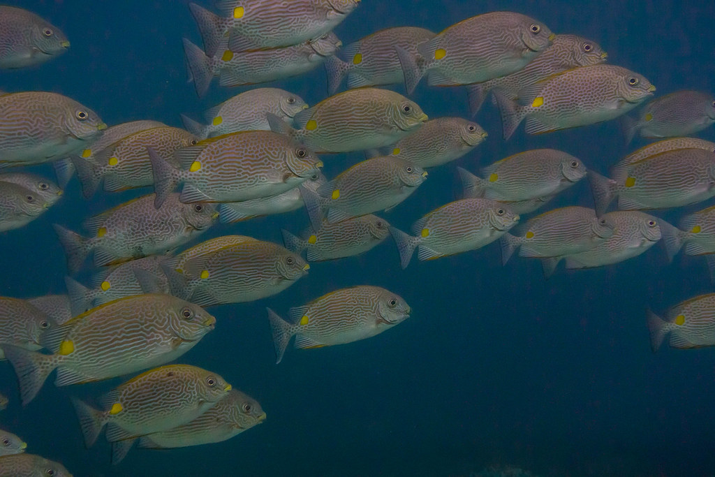 The World 39 S Best Photos Of Fish And Indonesia Flickr