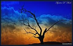 Effetto cromatico - Gennaio-2018 (agostinodascoli) Tags: albero cielo nikon nikkor cianciana sicilia photoshop azzurro nature texture landscape paesaggi