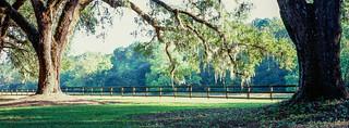 Boone Hall Plantation - Velvia 100