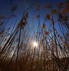 Papyrus (Robyn Hooz) Tags: grandangolo tamron uwa stars aperture papiro papiri papyrus blades lame sole sun