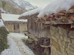 P2100092 (juanchunm) Tags: nieve asturias quirós invierno hórreo