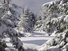 Winter im Harz (michaelmueller410) Tags: harz snow trees schnee bäume fichten tannen kiefern nadelbäume sonne schatten fir pine spruce tree sunny sun shadows grey sky hochharz stieglitzeck