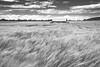 ile-285 (Tasmanian58) Tags: fiels wheat landscape sky clouds orleansisland quebec canada nikon rokor ngc nationalgeographic