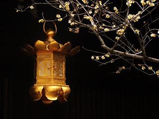 Winter Gold / Kyoto Kitano Tenmangu