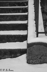 Le jardin des plantes sous la neige 04 (letexierpatrick) Tags: jardindesplantes paris france europe extérieur explore neige jardin escalier noirblanc noir blanc blackandwhite black white bw monochrome street