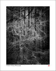 Threads (Chalky666) Tags: tree trees wood woodland forest winter southdowns westsussex landscape art mono