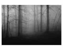U N T I T L E D  [ F O G  # 3 ] (bruXella & bruXellus) Tags: parcduden brüssel bruxelles brussels brussel belgien belgique belgium belgië leicax1 blackwhite bnw monochrome brume brouillard nebel fog