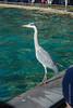 DSC_0238 (kubek013) Tags: stuttgart germany niemcy deutschland wycieczka wanderung trip sightseeing besichtigung stadt city citytour stadtrundfahrt zwiedzanie zoo wilhelma