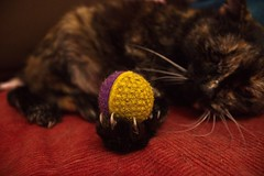 Kasandra's ball (Hipij) Tags: cat chat katze ball balle schildpatt krallen griffe patte paw claw